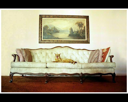 http://earlier.tc3imagery.com/images/why/cat-on-sofa.jpg